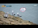 Island Trio 171106 Episode 25