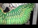 Зелень Крылья Спина лисья мастерская