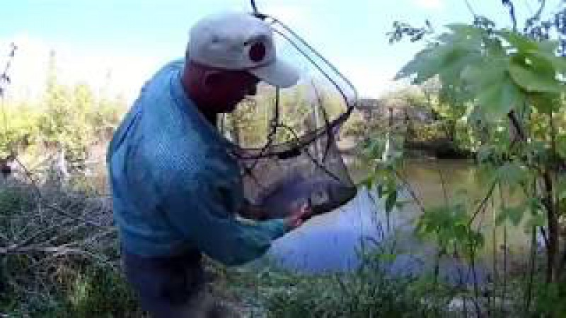 видео ловля карпа в октябре