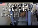The Military Working Dog Hospital