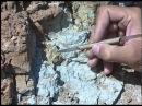 Палеорасследования: исчезнувшие экосистемы