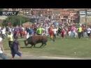 Фестиваль корриды «Торо де ла Вега» прошёл на фоне массовых протестов