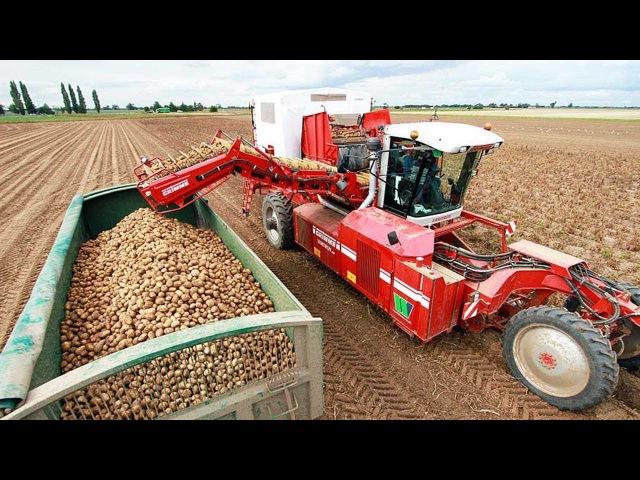 Potato Harvesting Machine Morden agriculture || Harvest Potato time || How it works Noal Farm 2018