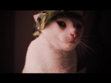 Meow Mix Song | EDM Cat Remix by Ashworth