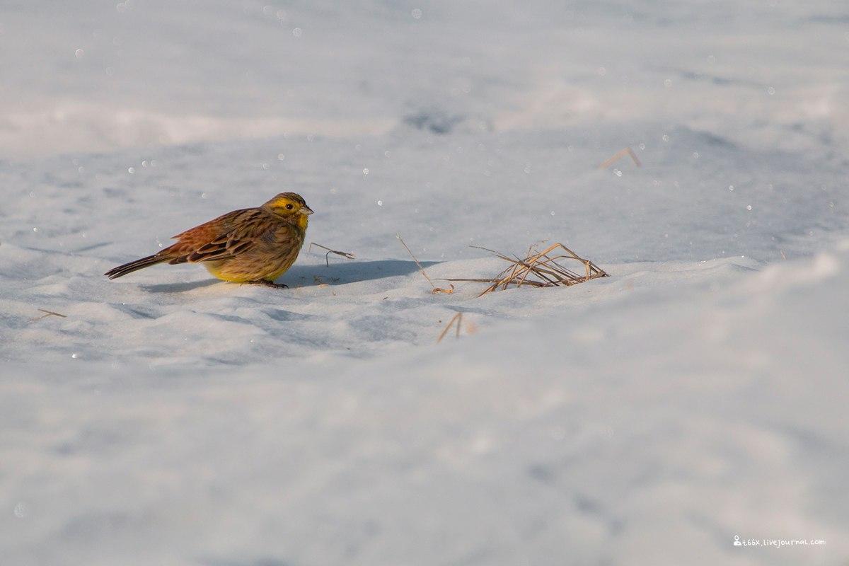 Птицы челябинской области,