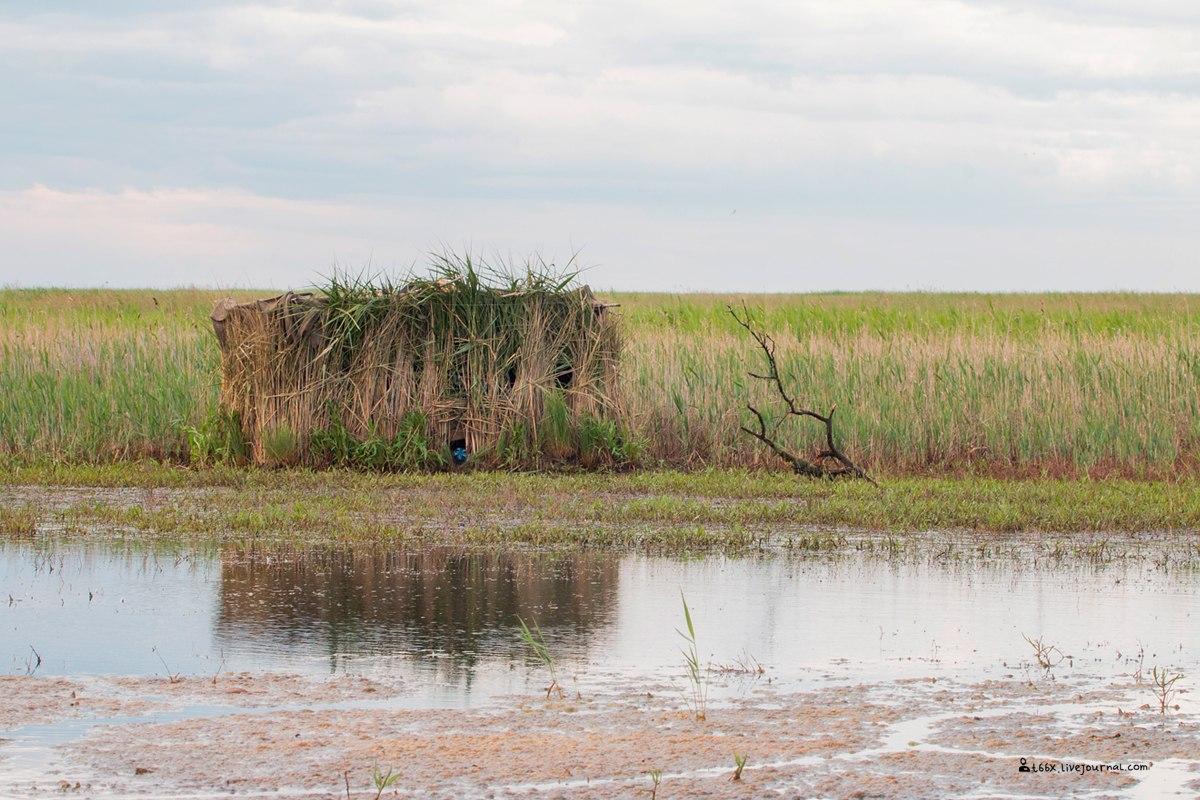 Птицы челябинской области, Скрадок, birding Russia