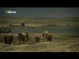 Мамонтёнок Застывший во времени Waking the Baby Mammoth (2009)