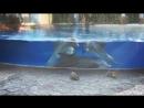 Дельфины и белки