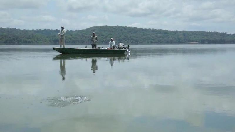 Грозная рыба-вампир_ как мы ловили пайару в Бразилии