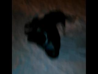 Прогулка с собакой в зимнее время.Весёлая приведение временни.
