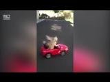 Собачка водитель