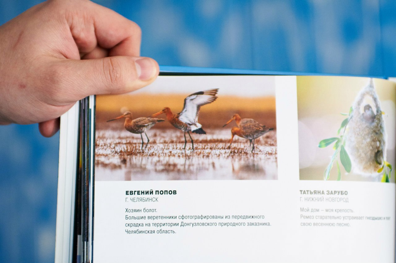 Птицы челябинской области, birding Russia
