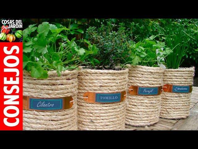 TOP 10 consejos para cultivar plantas aromaticas en maceta - Regar, Podar, Fertilizar, Sol, Plagas