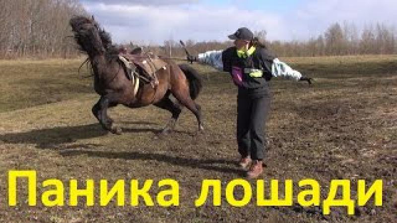 Лошадь в панике. Как успокоить.