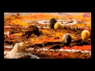 Aaj Ka Devi Putra | Hindi Dubbed Movies 2017 Full Movie | Hindi Movies | Venkatesh Movies