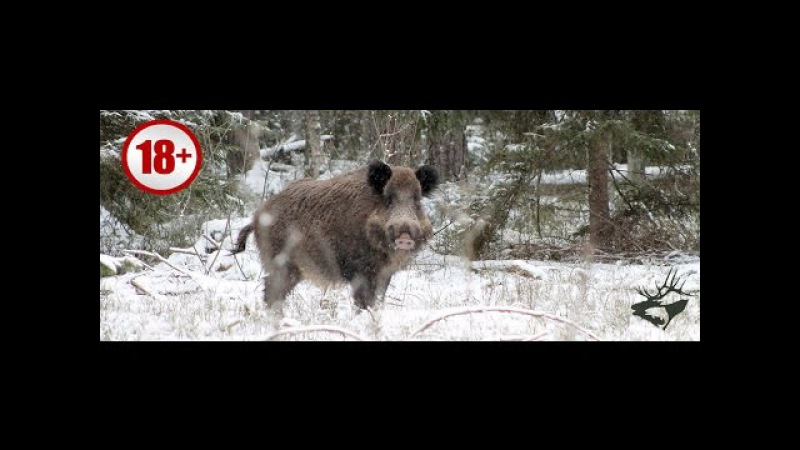 СУПЕР ОХОТА НА КАБАНА С АВТОМАТОМ 0016. Лучшие моменты изо охоты. Wild boar hunting/ Часть 0