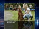 ГТРК ЛНР. Очевидец. Выставка собак. 14 мая 2017