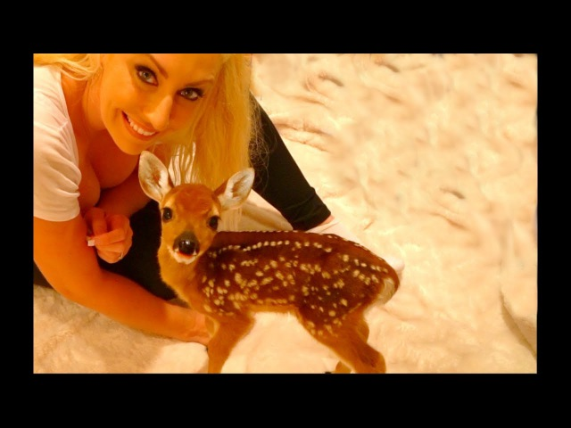 Dixie the Baby Deer