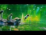 Удивительные скрытые места дикой природы Тайланда. Документальный фильм HD
