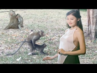 Most Amazing Monkey Mating With Group - Monkey Meeting At Wild Animals