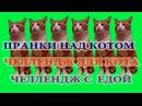 Пранки над котом Челлендж для кота Челлендж с едой