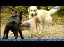 Закон о животных - практика применения