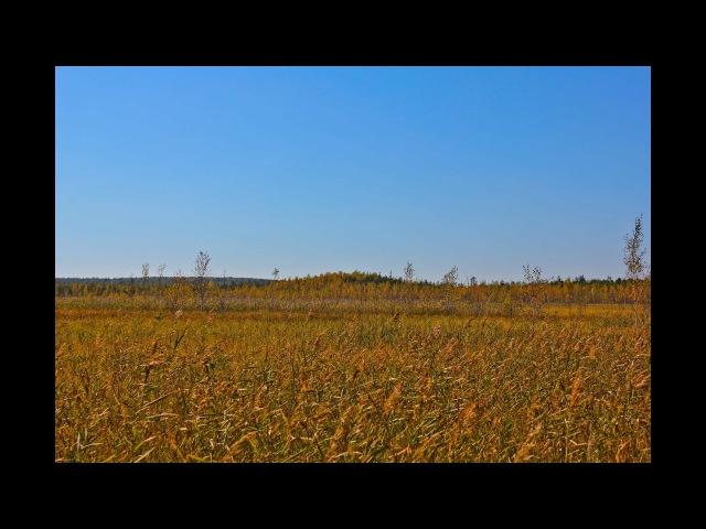 Шушмор. Чикалиное болото, центр. Таинственные острова и клюква