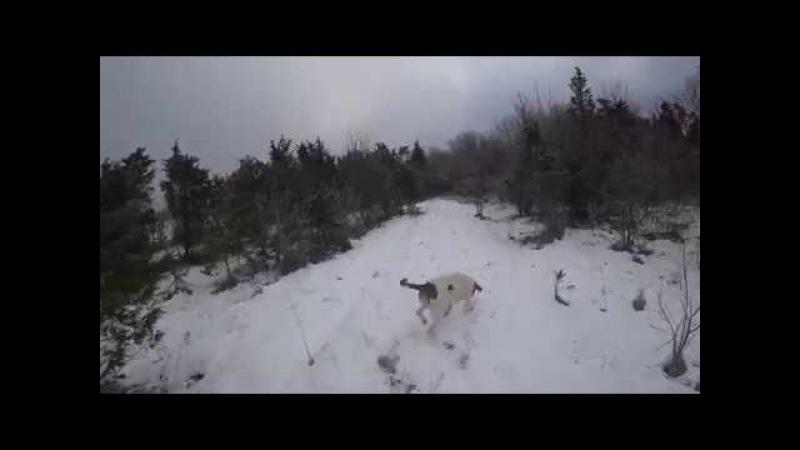 Охота 133 с гончей, замерз нос