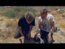Доминик Монаган и дикие существа 03 Чернохвостый скорпион Намибия Познавательный природа 2012