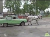 Настоящая лошадиная сила