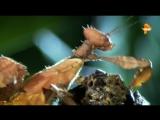 Тайны Чапман - Насекомые и паразиты [02/03/2017, Документальный, SATRip]