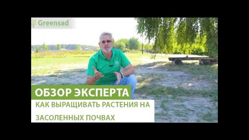 Как выращивать растения на засоленных почвах