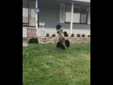 Ever Seen a Borking Zebra
