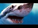 Animal Planet - Акулы Людоеды - Нападения на людей - Документальный фильм