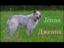 Дружелюбная собака Дженна из Лесного приюта ищет себе компаньона.