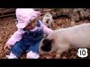 Смешное видео Приколы про животных