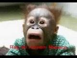 Rap do Homem Macaco (Sem alma e sem cora