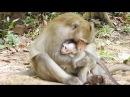 Big Monkey Bite Small Baby Monkey, why? Baby Monkey Kidnapped