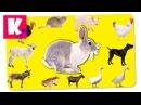 Домашние Животные на Английском. Как говорят животные. Звуки и названия животны ...