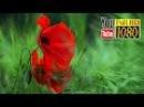 15 min ✿ Zen ✿ Beautiful Music ✿ Nature Sounds