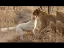 FEARLESS ANIMALS ★ Animals Who Are Not Afraid of Anything TNT Channel