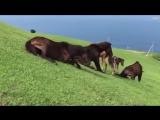 Молодые лошадки