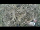 Открытие охоты на зайца 2016