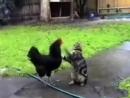 СМОТРЕТЬ ВСЕМ СМЕШНО! про кошек about cats, so funny, watch this