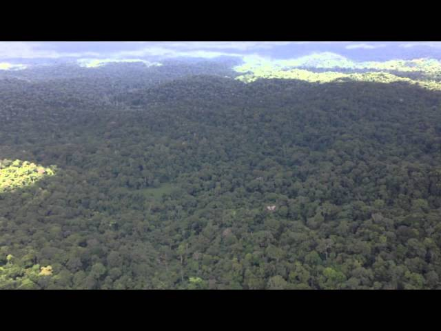 French Guiana rainforest from the air