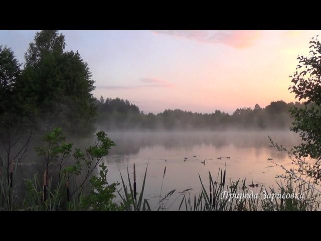 Утро Туман. Релакс. Медитация. Природа. Музыка. Йога. Сон. Птицы поют.