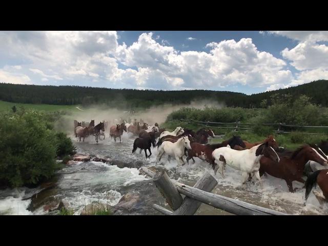 Longmire Days - Paradise Ranch