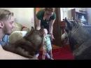 Хаски. Знакомство с малюткой. Часть 2. Husky meets baby.