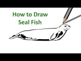 How to Draw a Seal Fish Easily Step by Step Drawing