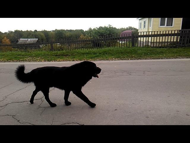 Рыбрека: Чёрный пёс на дороге ☆20170917